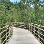 Boardwalk manuel antonio national park